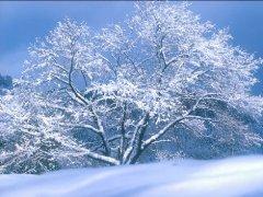 写景的作文200字-下雪啦
