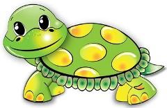 我家的小乌龟作文800字