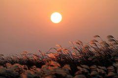 夕阳下的芦苇草作文500字